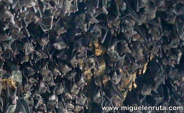 Murciélagos-Pura-Goa-Lawah