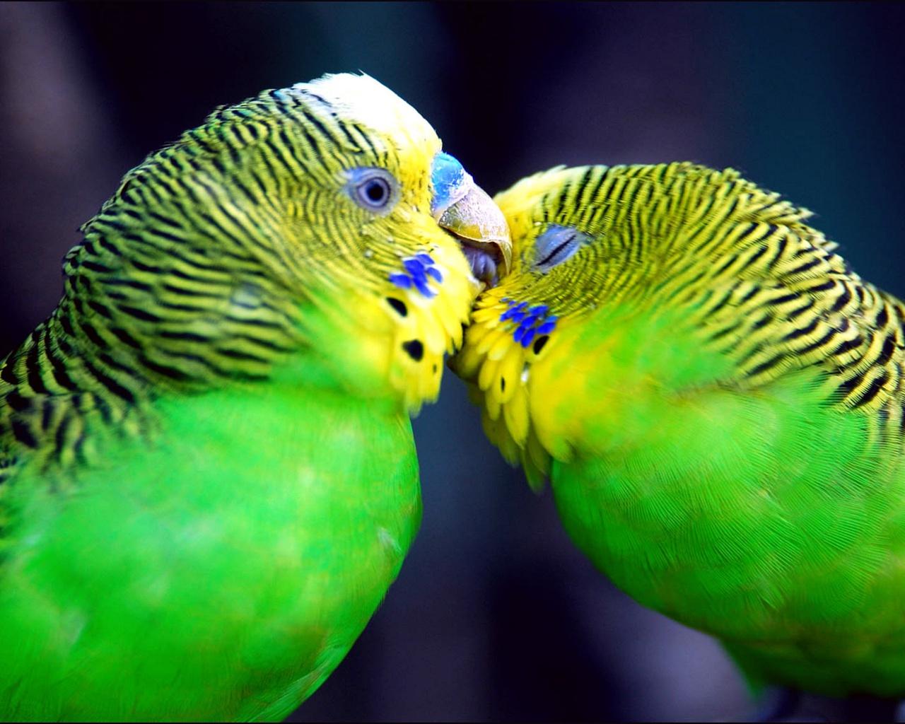 Wallpapers Love Birds: Wallpapers Fair: Love Wallpaper Design For Desktop
