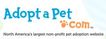 More PAWS Cats and Dogs Can be Found on Adopt a Pet!