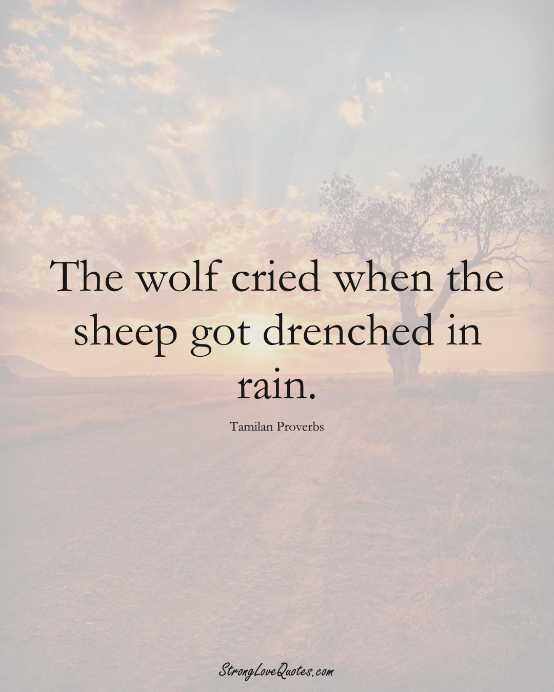 The wolf cried when the sheep got drenched in rain. (Tamilan Sayings);  #aVarietyofCulturesSayings