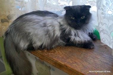 Барон - Крутой вислоухий мачо назван так не зря