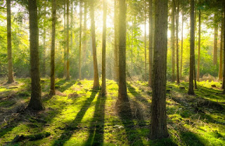 forest for human life | forest importance in human life | forest essay in 300 words