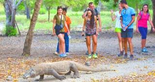 Indonesian Komodo Island Nature Tourism