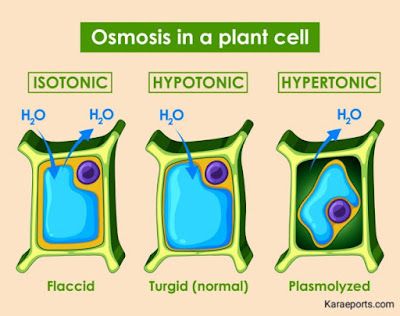 Osmosis Picture |The Fundamental Unit of Life