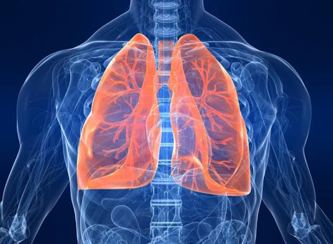 healthy lungs: फेफड़ों को रखना चाहते है स्वस्थ,तो करे इस आयुर्वेदिक लेप का इस्तेमाल