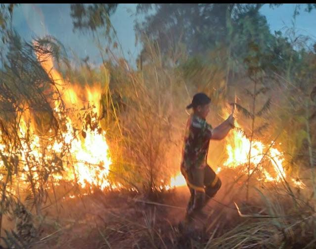 Lahan Terbakar, Anggota Koramil Bersama Polsek Dan Petugas Damkar Padamkan Api