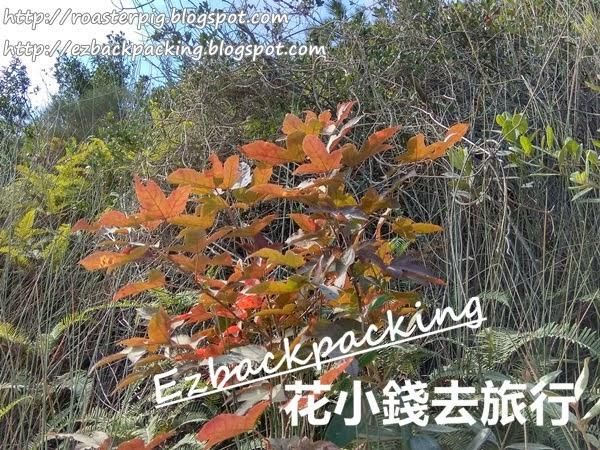 千島湖清景台紅葉3