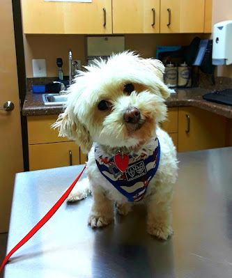 Pet Insurance, Dog Health Insurance.   Dogs, Pets, Pet health, Gifts for dog owners