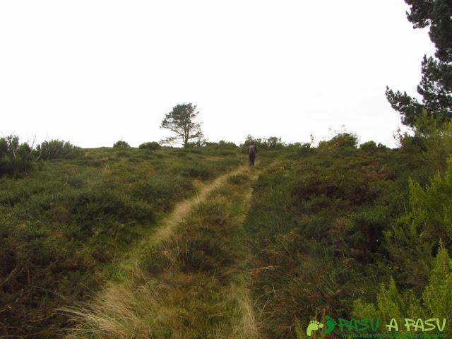 Pista forestal por la sierra del Ouroso