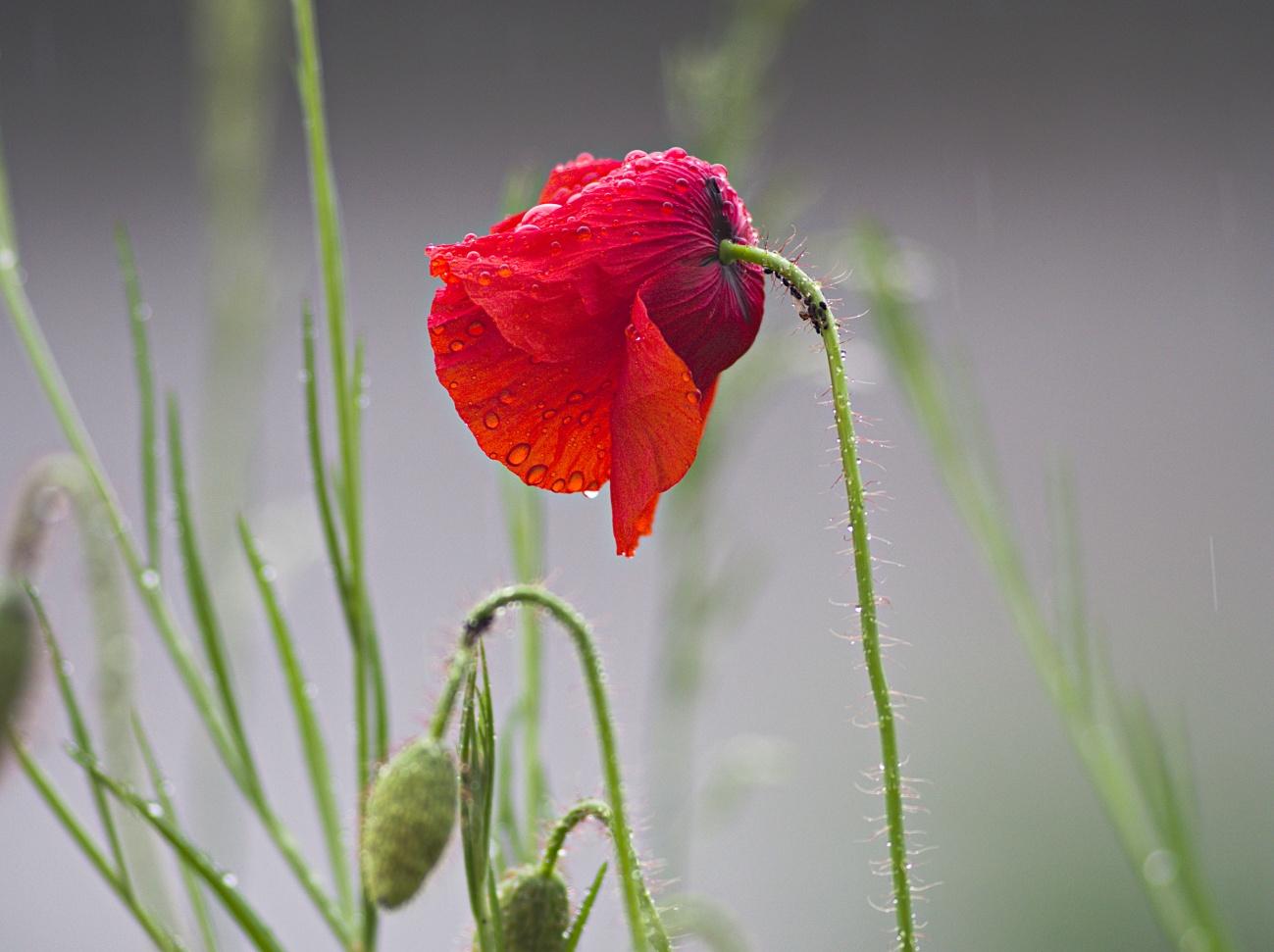 Bilder der Woche #76 (KW23/ 2021) – Erste (nasse) Blumen meiner Blumenwiese