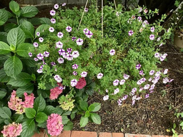 hanging basket of summer flowers