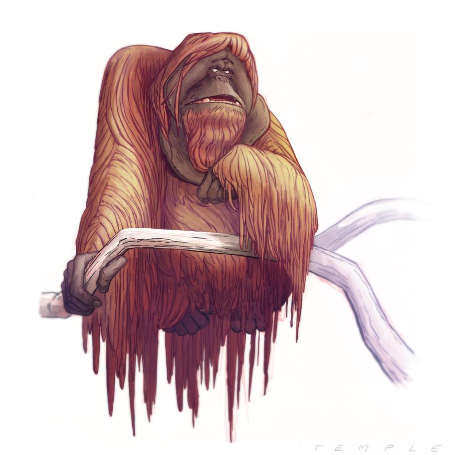 Temple: Orangutans