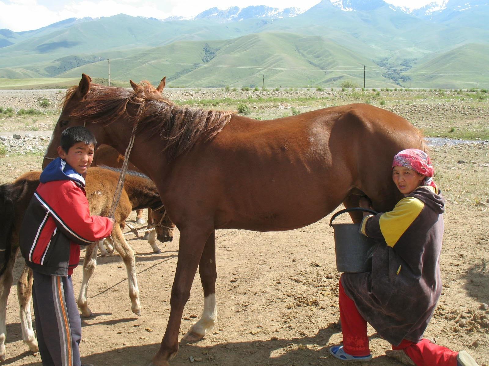 At sütü nedir ve faydaları nelerdir