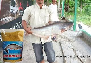 Umpan Ikan Patin Khusus Indukan