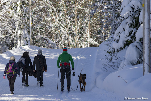 Paseando por el Winter Trail Tromsø - Noruega, por El Guisante Verde Project