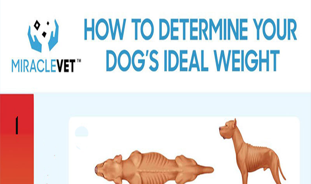 How to Determine Your Dog's Ideal Weight