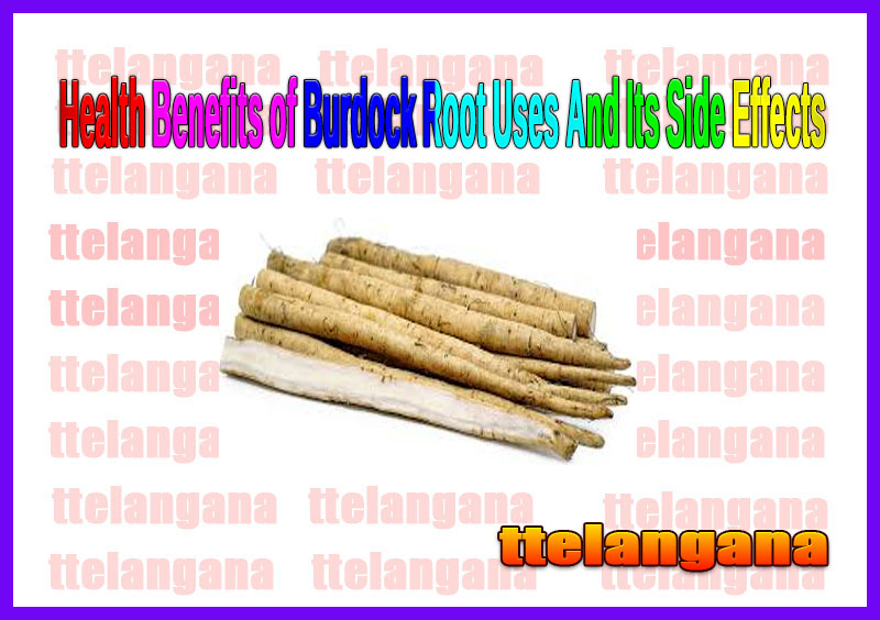 Health Benefits of Burdock Root Uses And Its Side Effects