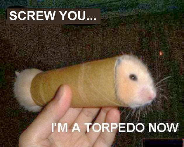 30 Funny animal captions - part 21 (30 pics), captioned animal pictures, hamster in the tube