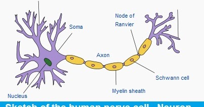 CBSE Class VIII (8th) Science | Chapter 8. CELL ...
