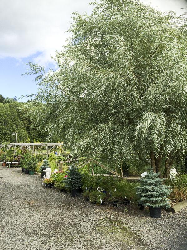 Trädgården, Ösmo Plantshop