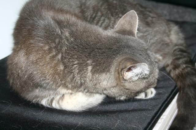 Catipilla Cat Cushion