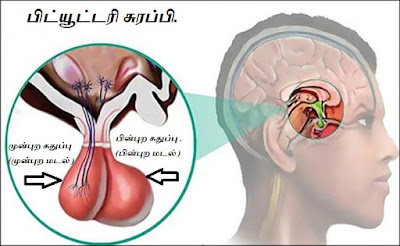 Pituitary Gland part - 2