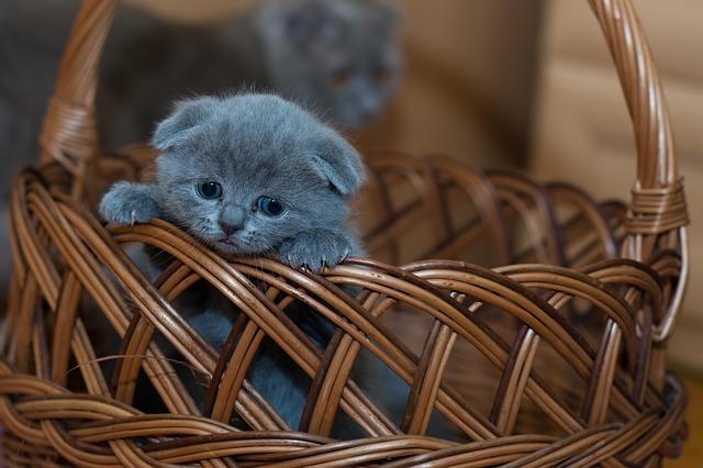Ini Hukum Jual Beli Kucing