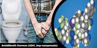 Antidiüretik Hormon