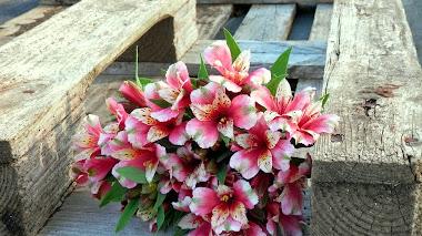 Alstroemeria hybrida: de flor en flor