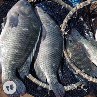 Consumo de peixe cresce, mas perda de renda da população preocupa setor
