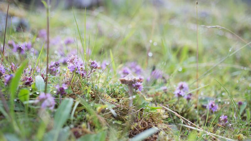 scottish highlands landscape mountains pretty purple flowers