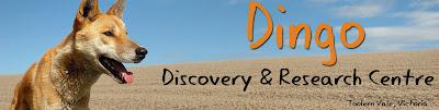 Dingo Discovery.net