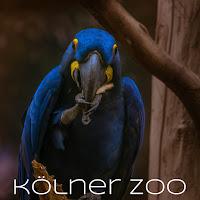 http://isabelle-fotografiert.blogspot.de/2016/10/im-kolner-zoo.html
