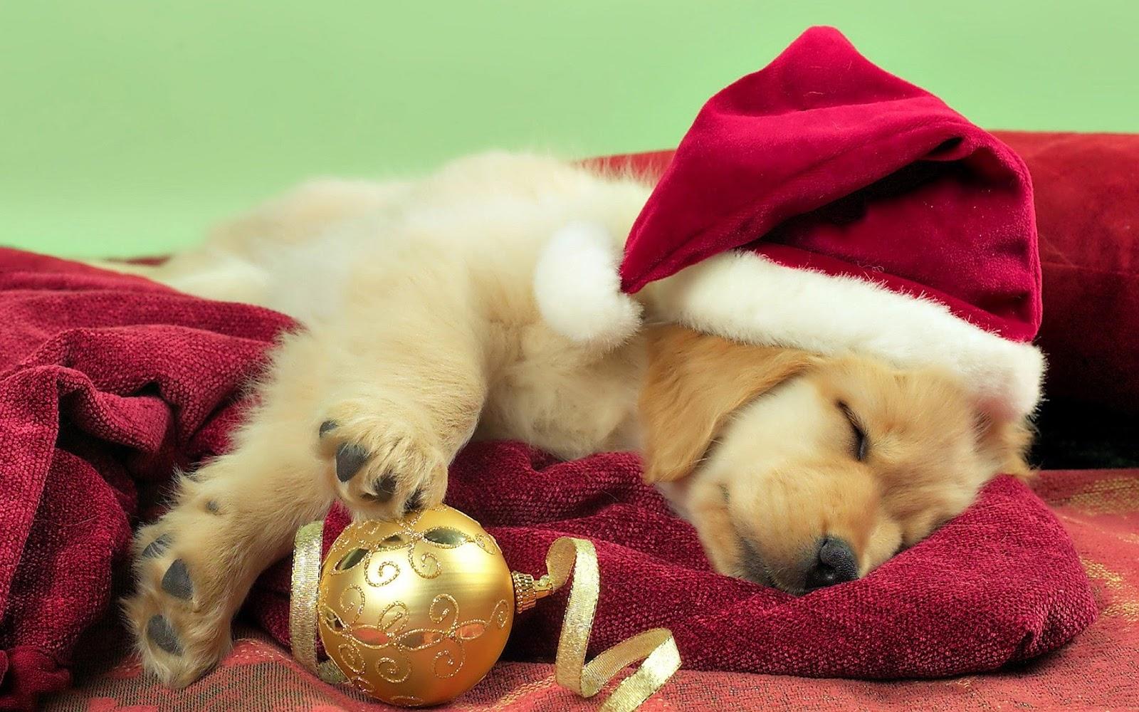 Labrador-Puppy-Christmas-Sleeping
