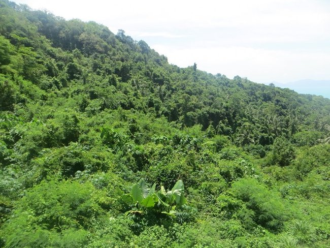 Густые заросли растительности Самуи