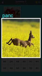 в поле где растет рапс бежит антилопа в игре 667 слов 2 уровень
