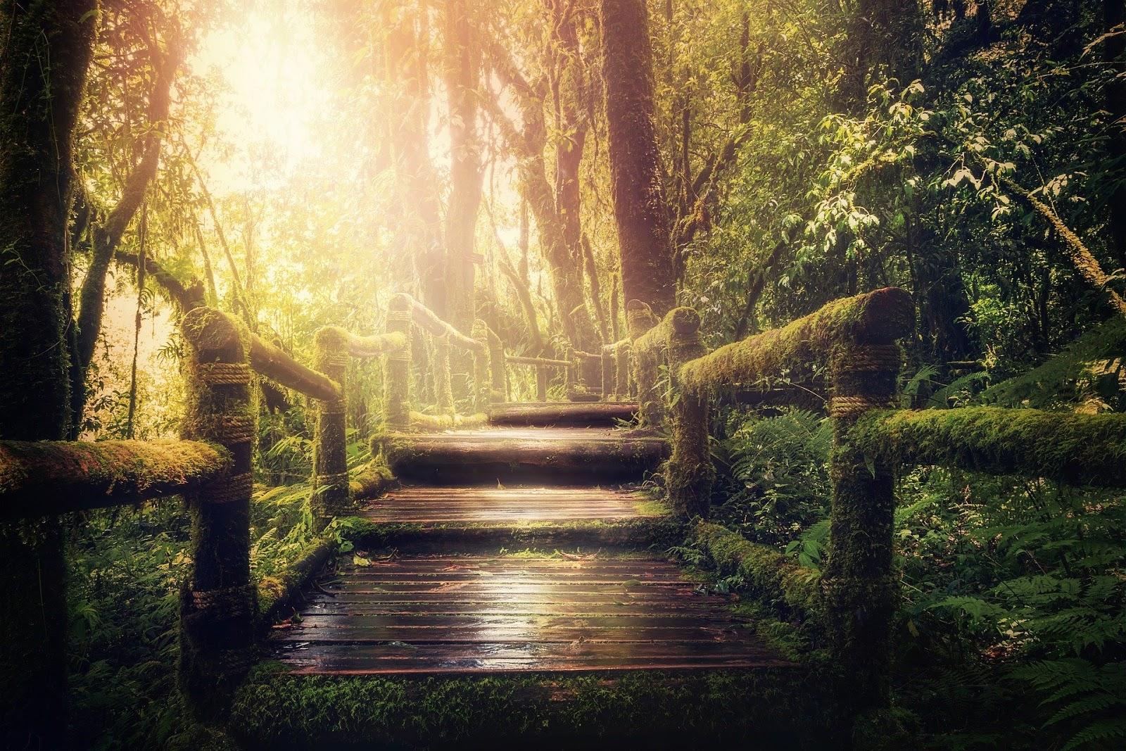 reinkarnacja duszy, droga duszy poprzez wcielenia