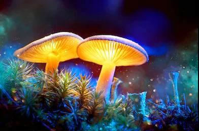 Mushroom,various types of mushroom