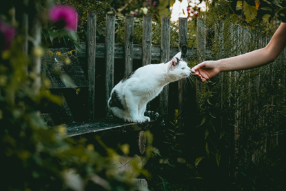 tabby-and-white cat sniffing an outstretched hand