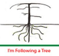 I'm Following A Tree