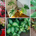 Remove This From Your Home! Highly Toxic Plants That Will End Your Life