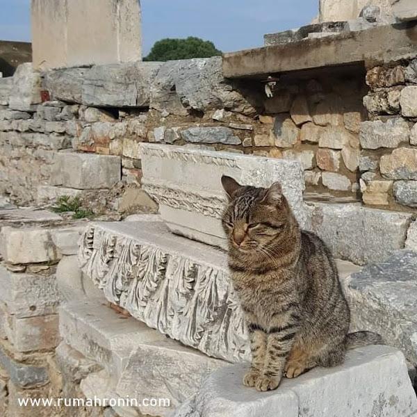 Kucing dan Satwa Liar Turki Yang Menjadi Kesayangan