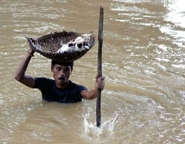 Picture of a villager carrying stranded kittens