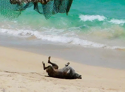 joy, rituals, thelma, dogs, paya bay resort, bliss beach, happiness, #payabay, #payabayresort,