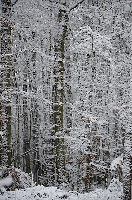 Arbre Forêt Neige