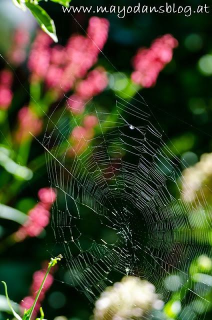 Spinnennetz im Garten