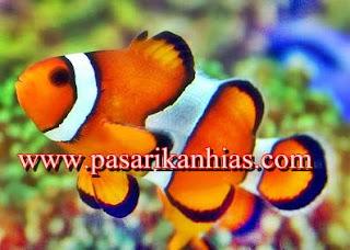 Ikan Hias Air Tawar Yang Mudah Di Pelihara
