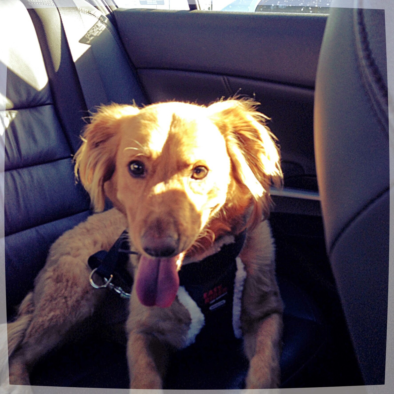 Bringing Chester home 11-8-2014 (The 3 Rs Blog)