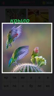 на кактусе сидят попугаи и размахивают своими крыльями