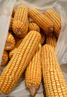 corn02 Thanksgiving Candles 14